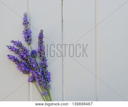 Sprig of lavender on a white wooden background