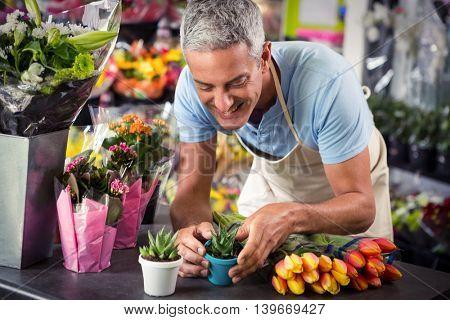 Male florist arranging flower pot at his flower shop