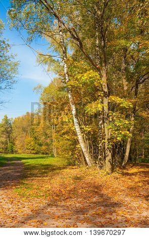 Autumn Landscape with a forest with yellow leaves and footpath