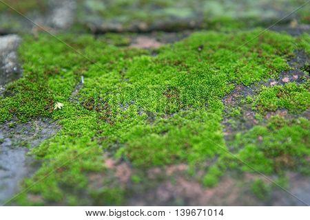 Moss Green nature The abundance of nature