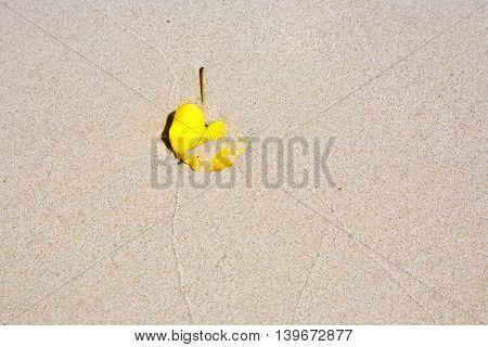 leaf lying at the beautiful sandy beach