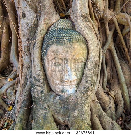 Buddhas Head In Mahathat Temple Is Covered By Roots