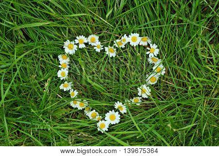 Beautiful daisy wreath in a heart shape on a green field