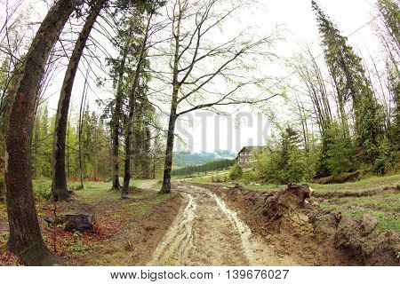 Pathway in mountain forest