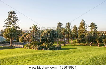 Norfolk pines and tropical trees with the manicured green lawn under a clear blue sky at Monument Hill in Fremantle, Western Australia.