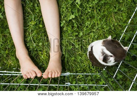 Guinea pig and baby's feet in a paddock on the green grass