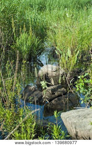 Nature landscape of marshland by the river with large boulders