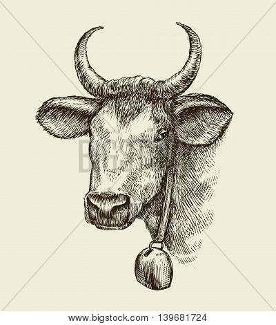 Hand-drawn cow, bull. Sketch a farm animal. Vector illustration