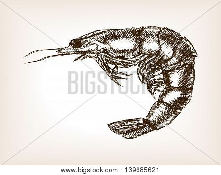 Shrimp sketch style vector illustration. Old hand drawn engraving imitation.