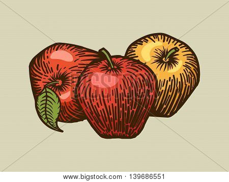 Apple engraving style vector illustration. Scratch board style imitation