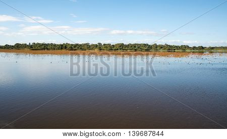 Bibra Lake natural wetland reserve with native plants and calm waters under a blue sky in Western Australia.