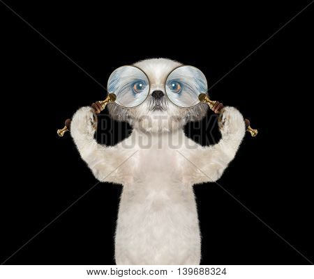 Cute dog looking through two magnifying glass magnifier -- isolated on black