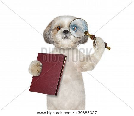 Dog looking through magnifying glass magnifier and going to read a book-- isolated on white