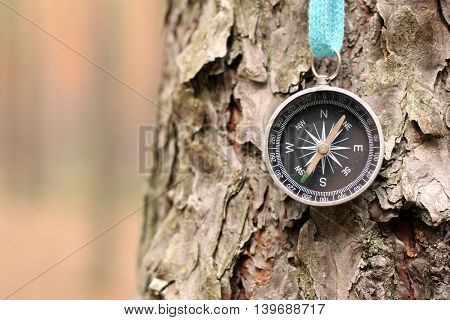 Old iron compass on tree in forest. Blurred background for inscription.