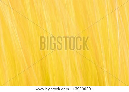 Abstract yellow background with thin white lines.