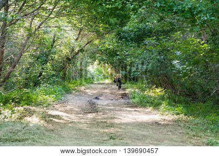 Cyclist on the road through the trees in summer green forest.