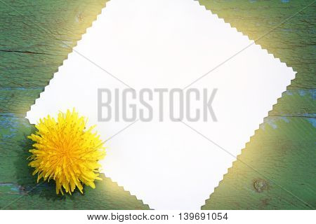 sunny yellow dandelions and clean card for inscriptions lie on an old wooden surfactant is a top view / congratulatory background with flower