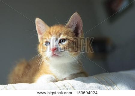 Cute orange kitten with large paws in sunny day