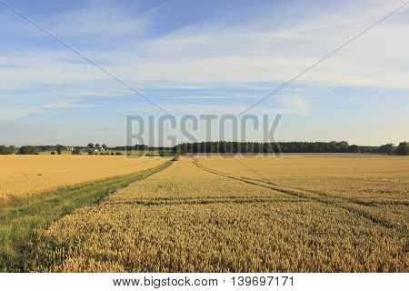 Summer landscape with hazy skies over fields of ripening wheat by a grassy farm track