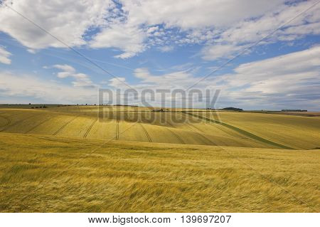 rolling golden barley fields with a disused farm in the yorkshire wolds in summer