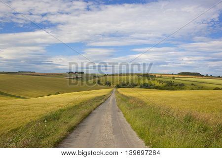 rolling golden barley fields with a small rural highway in the yorkshire wolds in summer