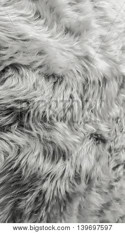 Pattern of background from soft fur texture