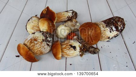 a few white mushrooms with a thick, powerful leg and a brown hat is lying on a wooden table, also there is the mushroom with red hat