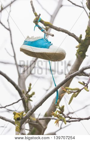 On A Tree Branch Hanging Shoe Girl