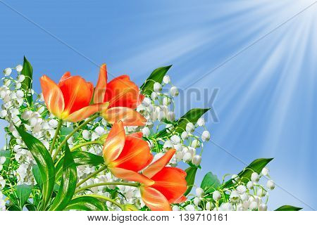 Spring landscape. flowers lily of the valley. tulip