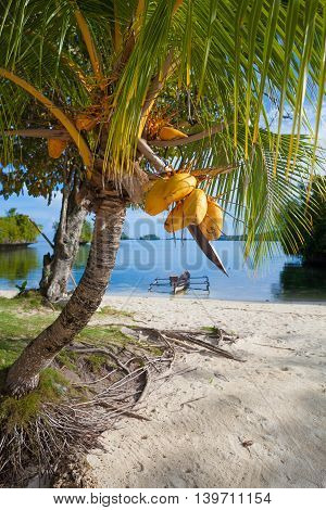 Photo Untouched Tropical Beach in Bali Island. Palm with fruits. Vertical Picture