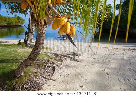 Photo Untouched Tropical Beach in Bali Island. Palm with fruits. Vertical Picture. Blurred Background.