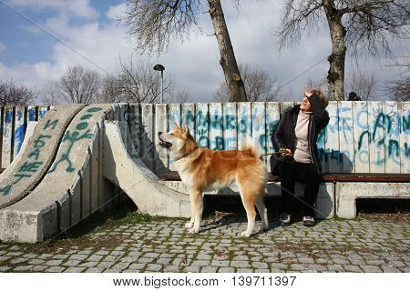 Lady with Akita Inu watch overflight sitting in front of graffiti