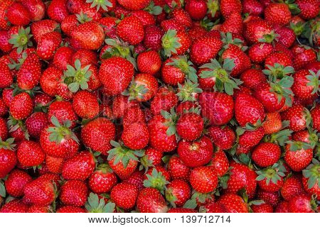 Fresh ripe perfect strawberry - Food Frame Background from freshly harvested strawberries