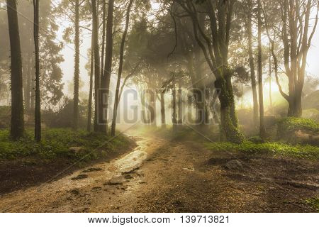 A Forest Path with Sun Rays in the Early Morning