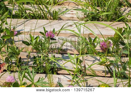 Green grass and gray wooden old fence. Summer sunny landscape with violet flowers. Concept summer natural background