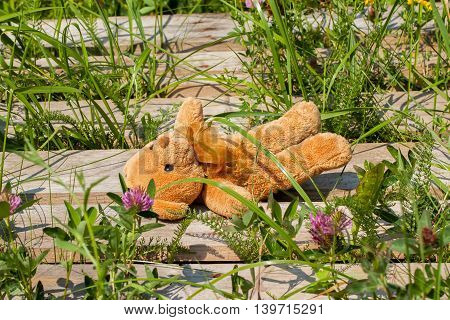 Lost toy bear lonely and sad lies in the grass, on a wooden platform