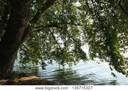 Threes touching water of Dojran lake in Macedonia