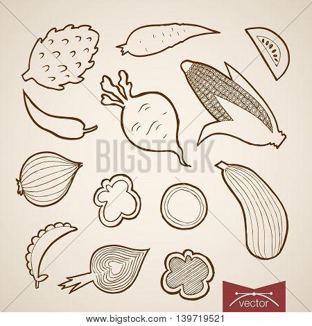 Engraving vintage hand drawn vector vegetable Pencil Sketch