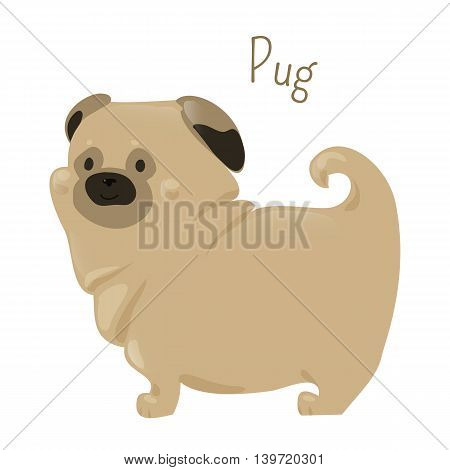 Pug isolated on white. Breed of dog with a wrinkly, short-muzzled face and curled tail. Fine, glossy coat fawn or black. Part of series of cartoon puppy species. Child fun pattern icon. Vector