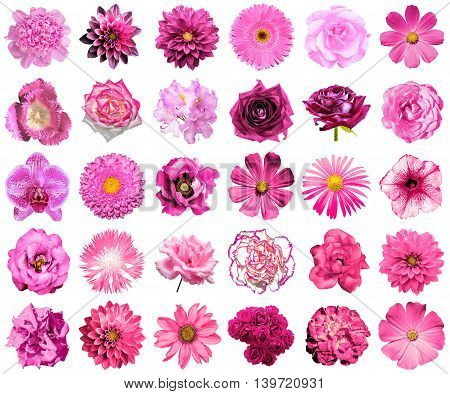 Collage Of Natural And Surreal Pink Flowers 30 In 1: Peony, Dahlia, Primula, Aster, Daisy, Rose, Ger