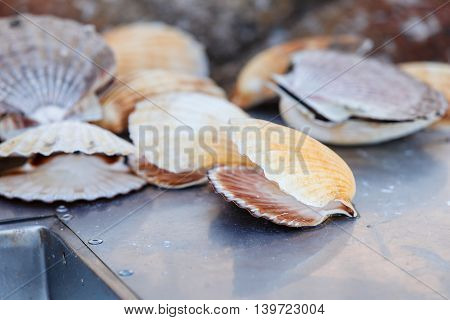 Many empty scallop shells lying near big metal sink. Peeling fish station. Norway.