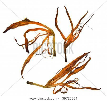 bizarre curved extruded dried lily petals  set
