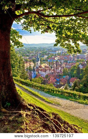 Green capital of Europe 2016 Ljubljana aerial vertical view with tree Slovenia
