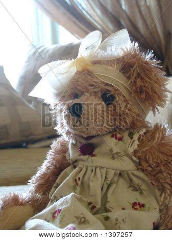 Potrait Of A Teddy - Side