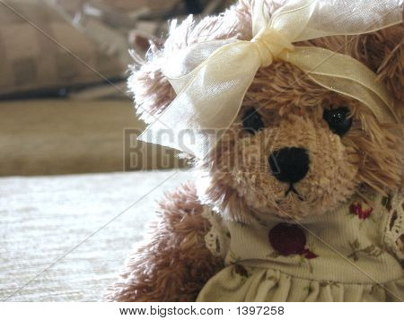Potrait Of A Teddy
