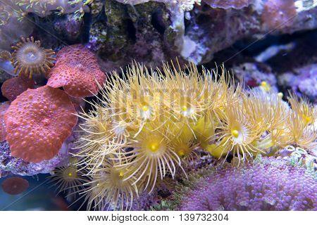colorful coral. reef and algae aquatic plants