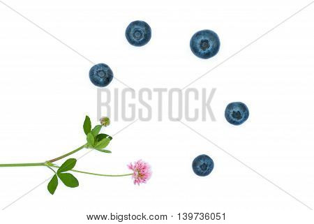 Isolated juicy blueberries and flower on a white background