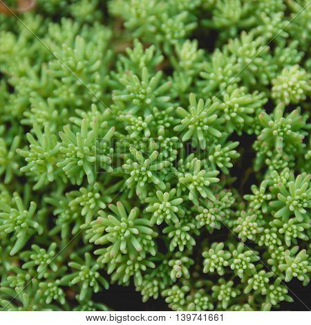Green Grass Natural Background Texture. Fresh Spring Green Grass. Nature Concept