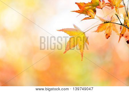 autumn background Red leave with free copyspace