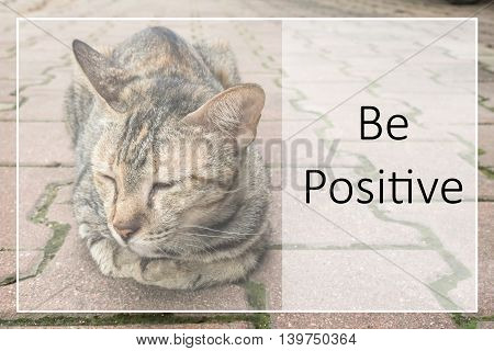 Inspirational Motivational Quote On Brown Cat  Background